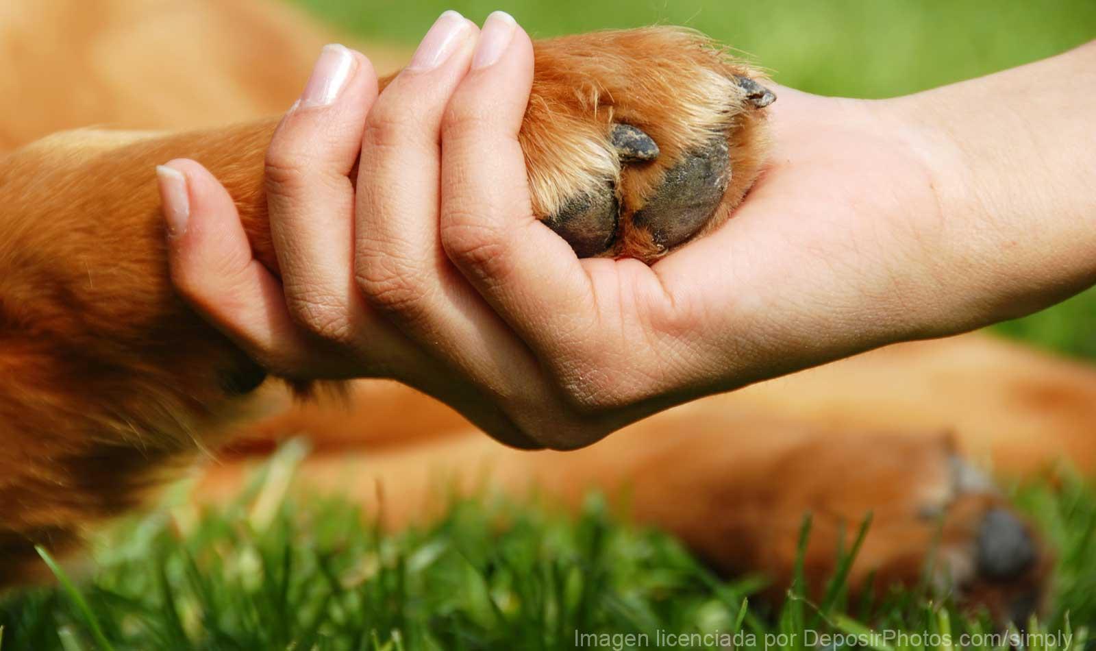 вакансии ветеринарный врач калининградская область