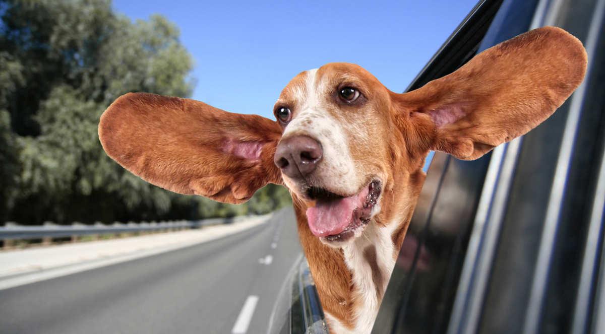 Зоотакси, такси для животных в Балаково