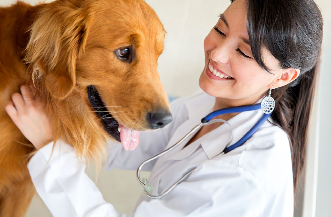 veterinary doctor Our vet services offer the most accurate diagnosis along with the most appropriate treatment plans our goal at carter vet animal clinic is to offer modern, reputable care that is appropriate for each.