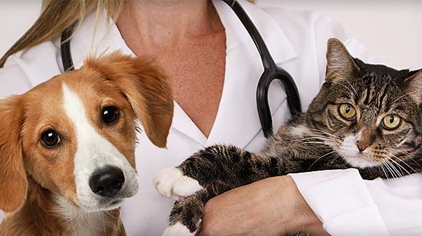 Мегаэзофагус кошек и собак