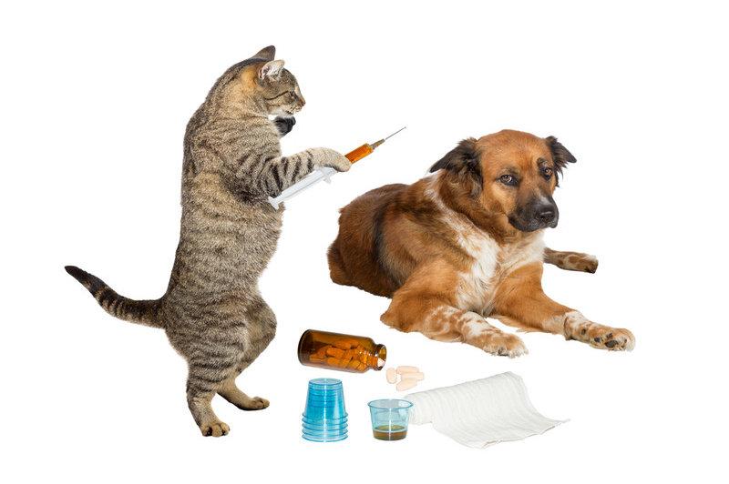 Аспирационная пневмония кошек и собак