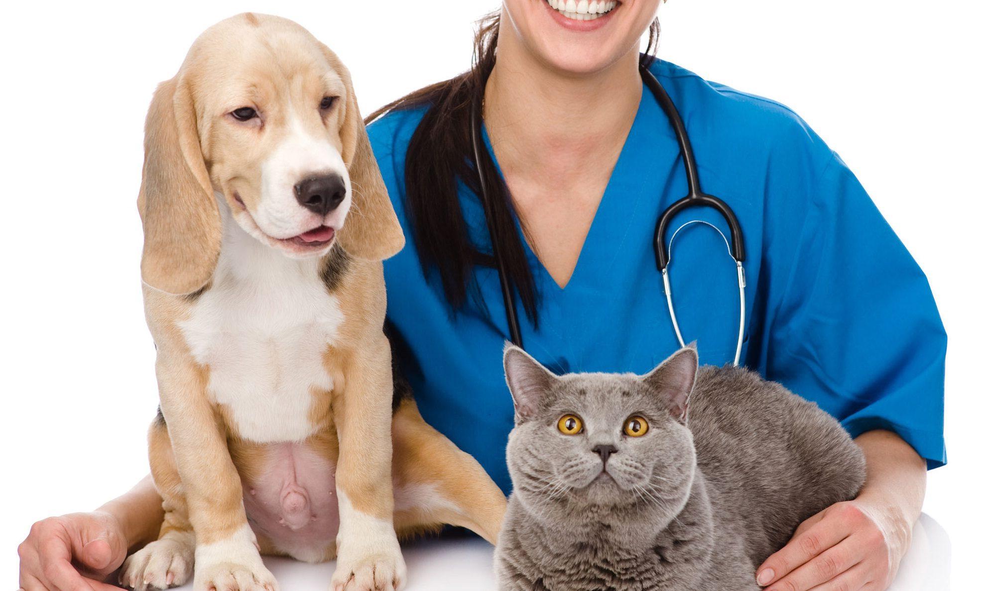 Эзофагит кошек и собак