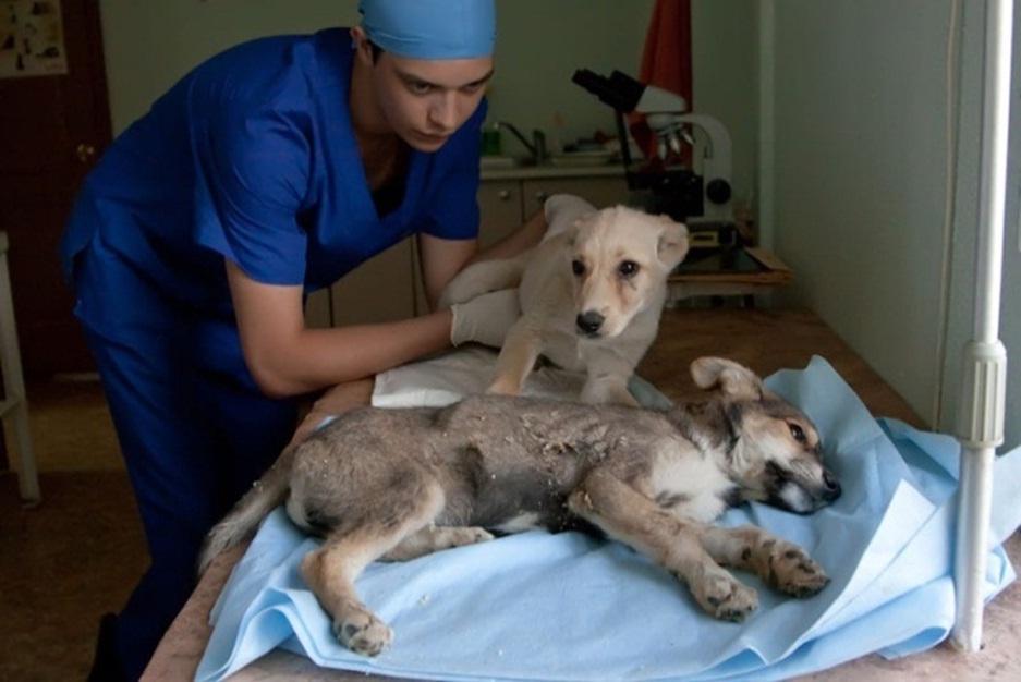 Лечение гастрита у собаки в домашних условиях