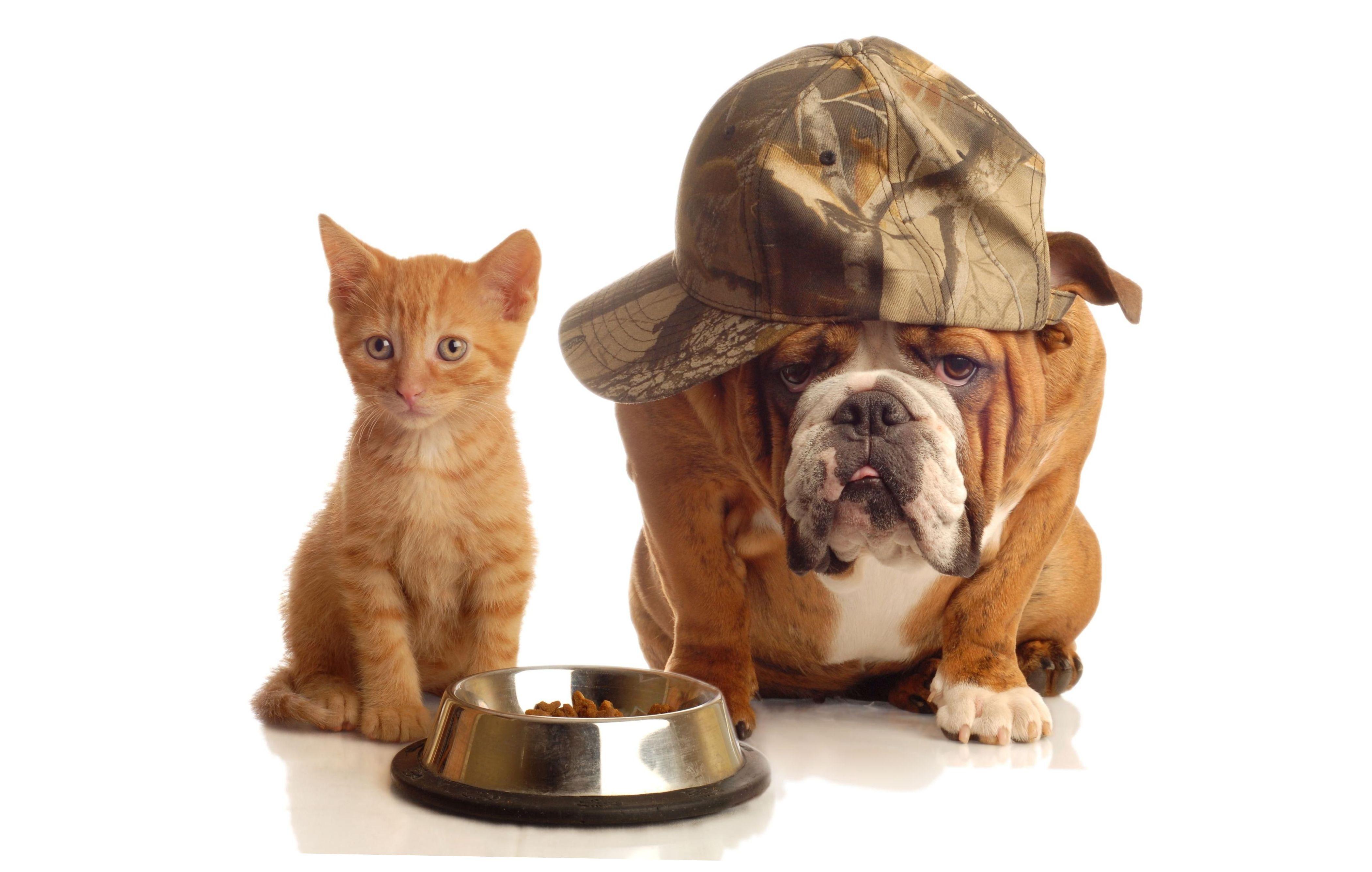 Панкреатит собак и кошек