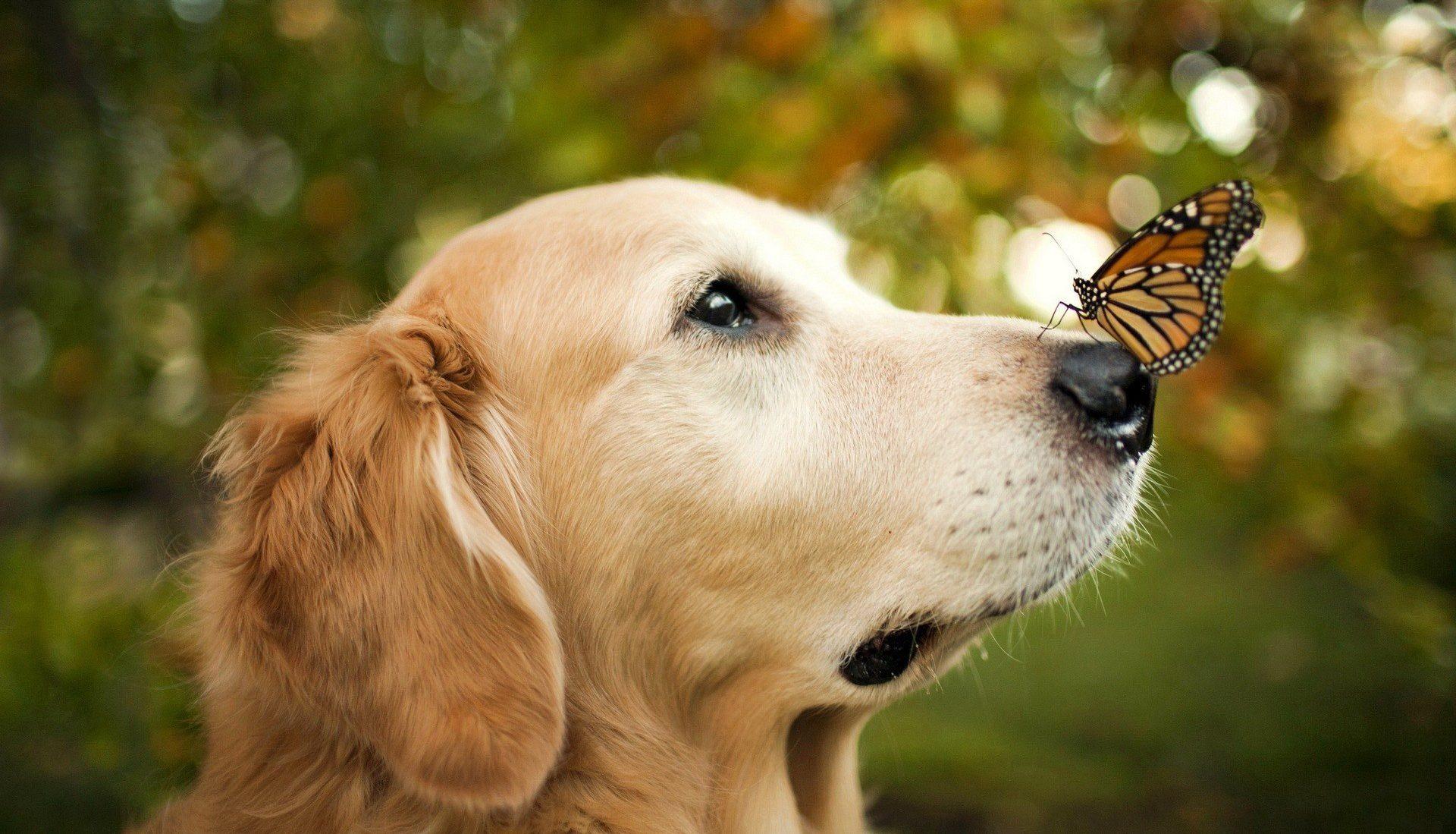 Аспергиллез верхних дыхательных путей кошек и собак