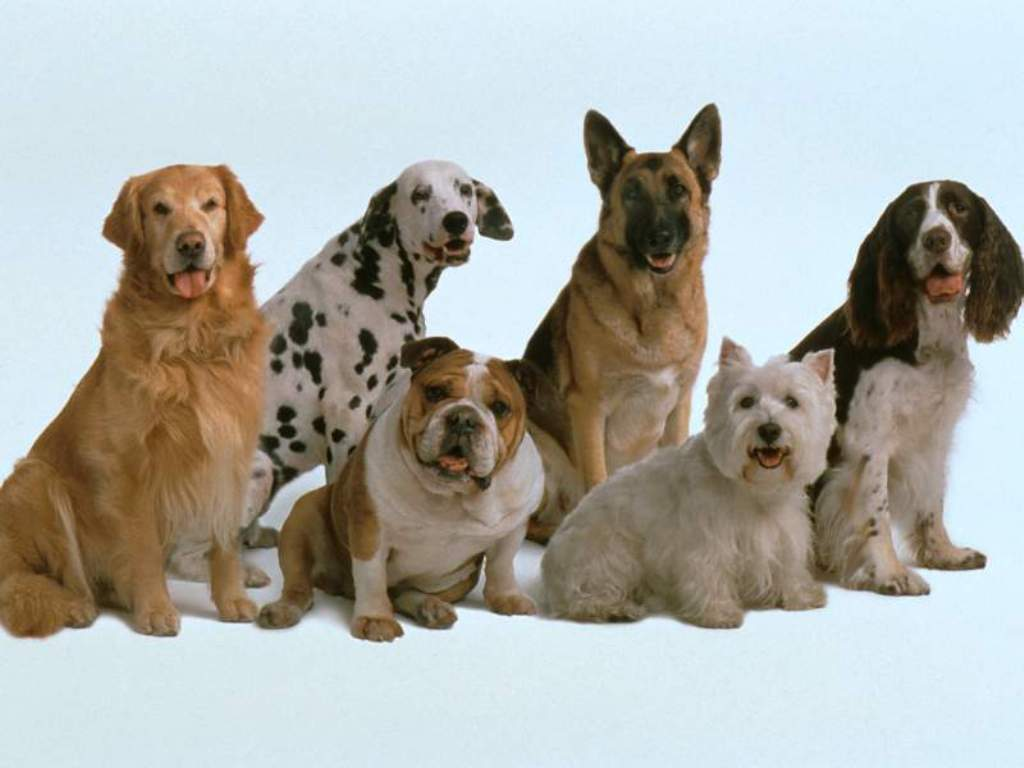 Гипоплазия трахеи у собак