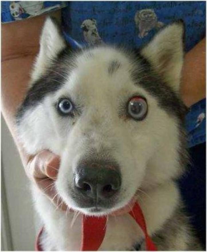 Глаукома собак и кошек