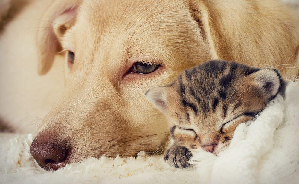 Интертриго собак и кошек