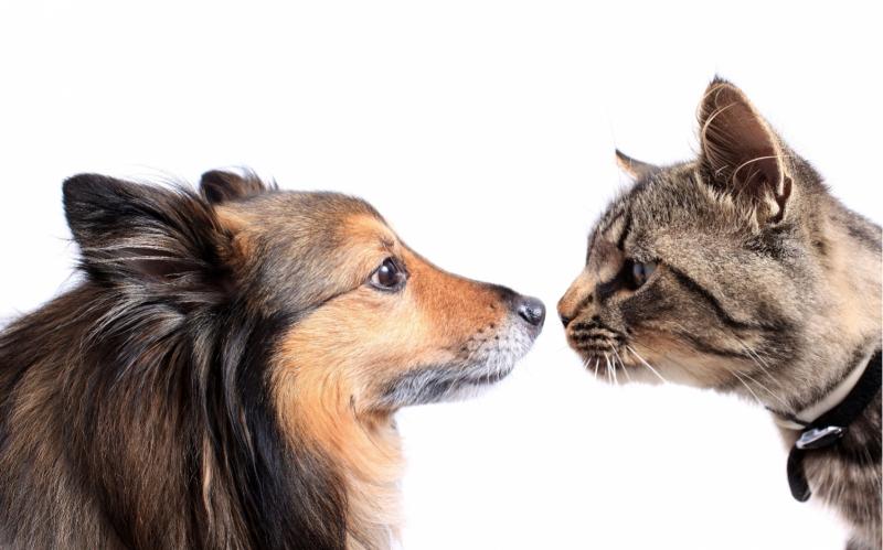 Кожные рога у собак и кошек