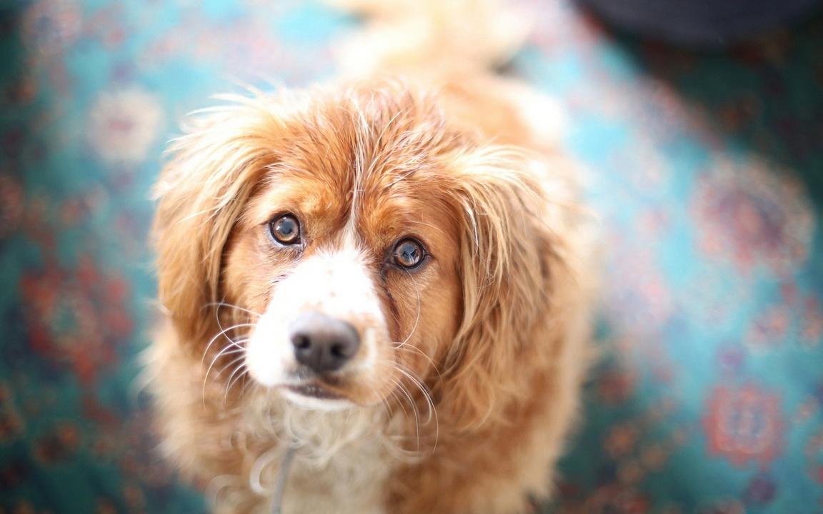 Назодигитальный гиперкератоз у собак