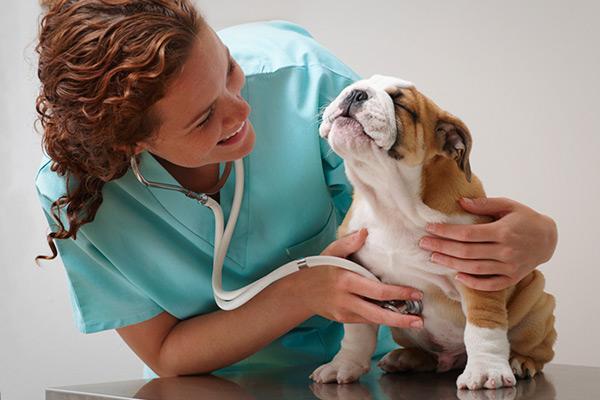 Подроговичный пустулезный дерматоз собак