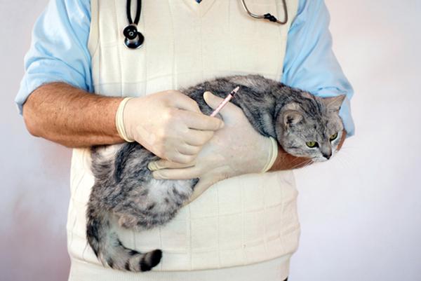 Зоонозные заболевания собак и кошек