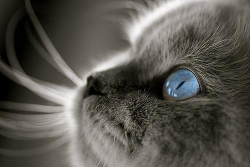 Аутоиммунные заболевания глаз у животных