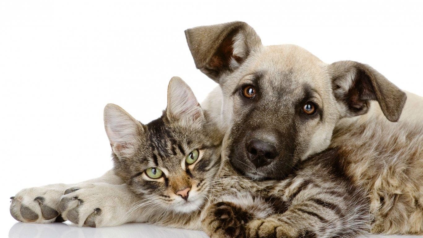 Мастоцитома собак и кошек