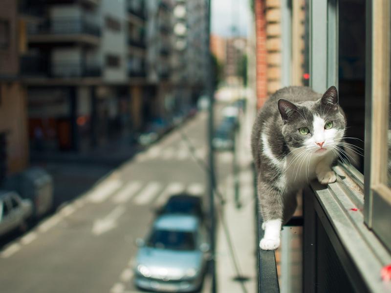 Падение кошки с высоты